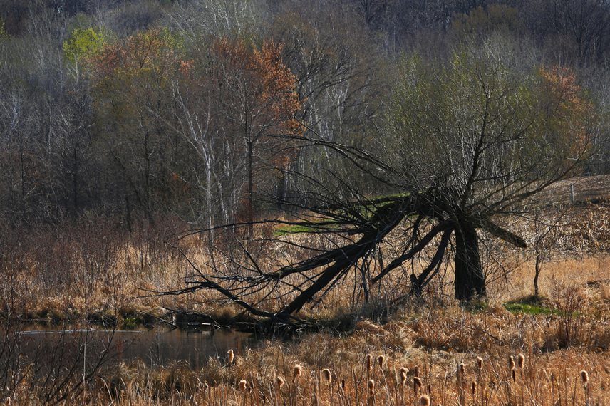 Photograph of an old forgotten tree broken with age.