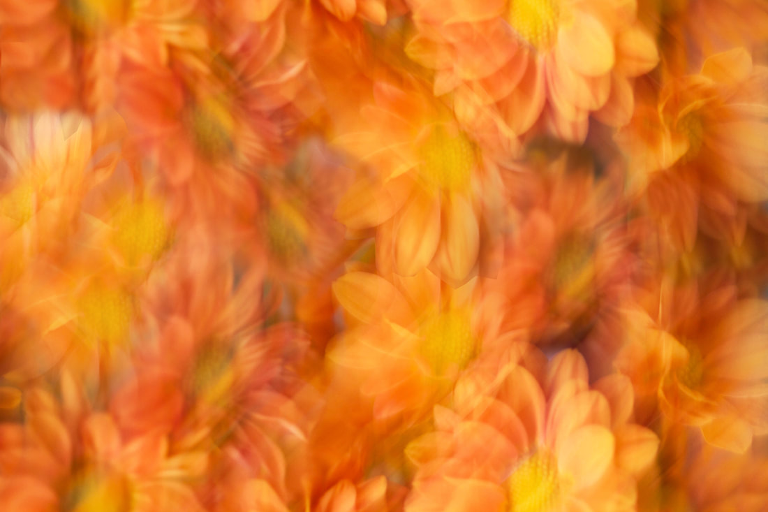 A riotous bunch of orange mums photographed in the impressionistic style.