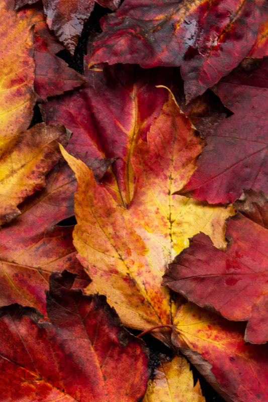 Image of fall leaves on the ground.
