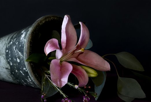 Photograph of a delicate Pink Lily in a tipped flower pot