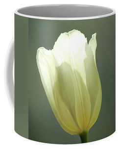 Photograph of a soft White Tulip captured in the morning light featured on a mug.
